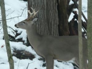 deer-at-home-2