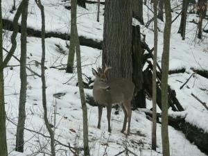 deer-at-home